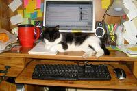 Wilma's Desk