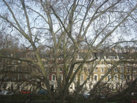 Paddington Trees