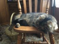 Kit Cat has been naughty.