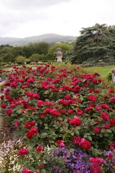 The Upper Rose Terrace at Bodnant Garden, Graig, Conwy, Wales.  Photo by Jeff Buck