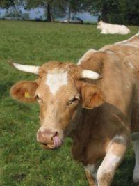 Kráva :-)