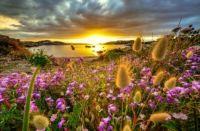 Wildflowers at sunrise