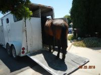 Sylphie boarding the trailer