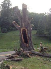 Screaming tree! (large)