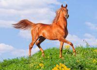 Magnificent Horses 1