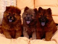 Fluffy Puppies