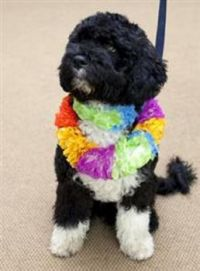 A portuguese water dog gift to the Obama Girls from Sen Edward Kennedy