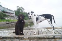 Dogs on the dock