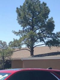 Confusing Perspective #62 (is the tree growing out of the roof?)