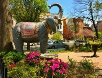 An Elephan in the City