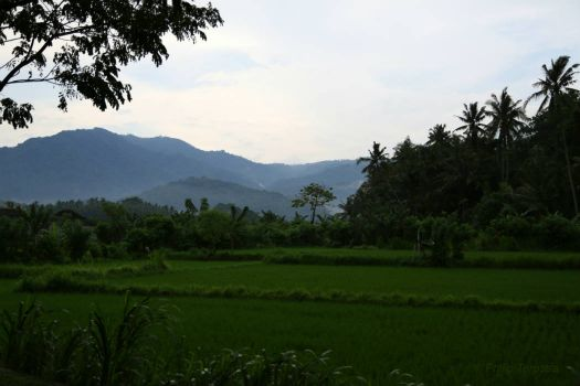 Hills and Fields in Bali