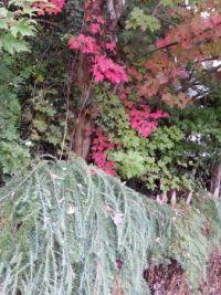 beautiful Seattle fall