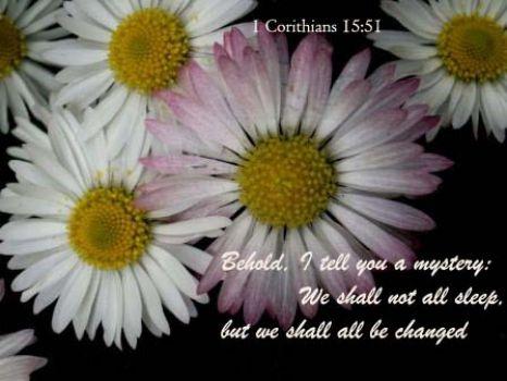 1 Corinthians 15:51 pink daisy