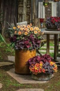 Rustic Fall Container Gardens.