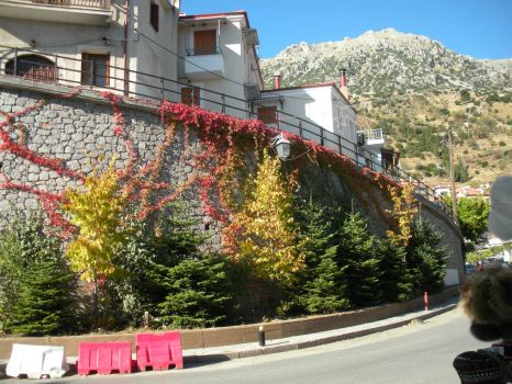 Fall foliage in Parnassus, Greece