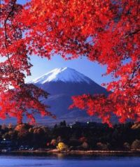 Mt. Fuji Through the Japanese Maples...