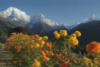 bergenenbloemen