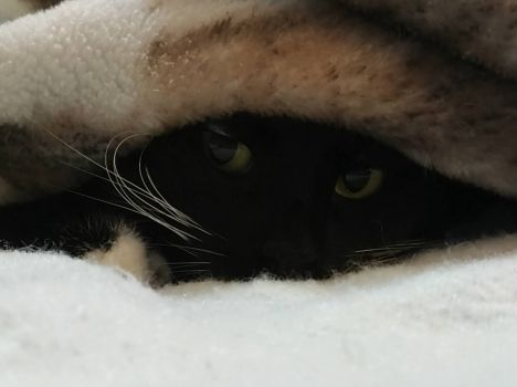 Pixie Peeks Out
