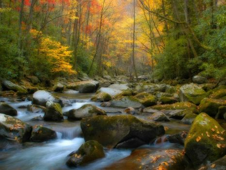 Tennessee Fall
