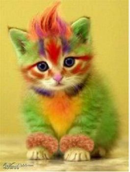 Colorful Kitty <3