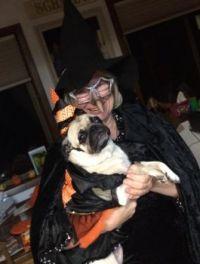 Pugs at Halloween