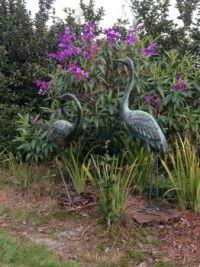 Cranes in my Mom's backyard