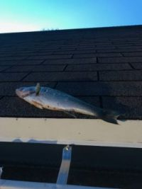 fish on the roof