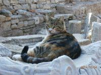 Ephesus Cat 1
