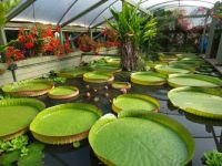 Blue Lotus Water Gardens / Melbourne