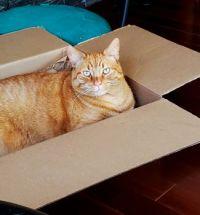 Papaya in box 2020