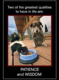 Wise dog!