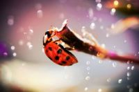 LADYBUG FOR MY DEAR FRIEND ANN, AKA MAMACITA'