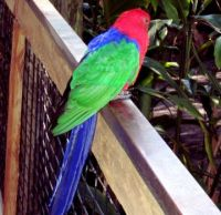 Brightly colored bird at zoo