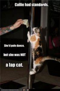 No lap dances