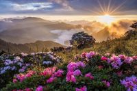 Wildflowers and mountain sunrise