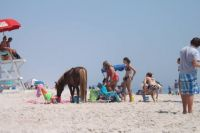 On the beach at Assateague