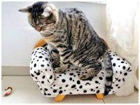 eeek!  A Crochet Mouse! Not on my New Sofa!