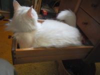 This is MY drawer, Mom.  Do not disturb me.