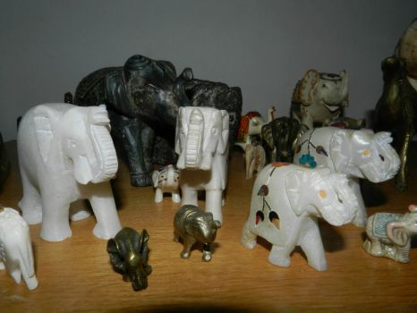 My elephants