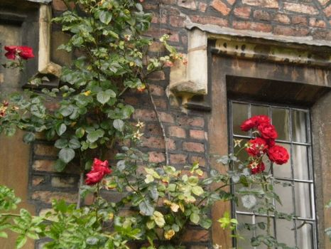rose scented window