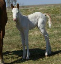 Cute little filly
