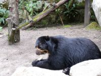 Spectacled Bear Rescue Site