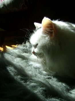 Freya - Enjoying a sunbeam