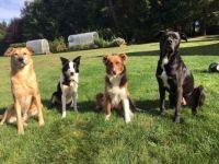 My Crew: Taz, Kate, Pippi, Bug