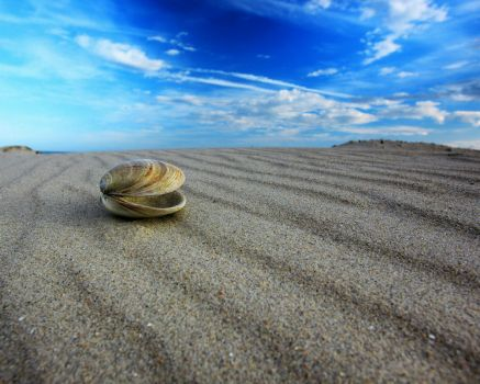 A lonely shell!