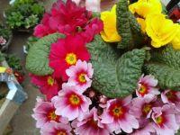 At the Garden Centre (8)