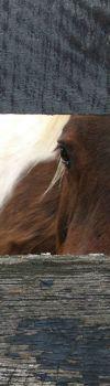 Horse-eye-vertical-483x1675