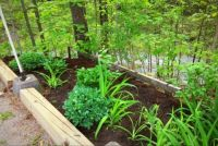 New little corner garden