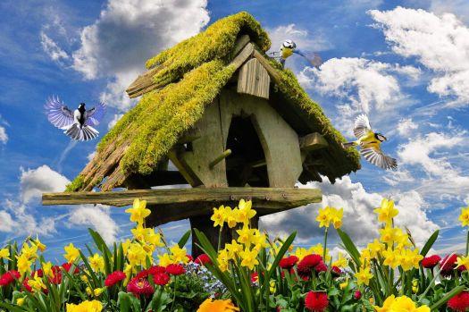 Frühling - alle Vöglein sind schon da!