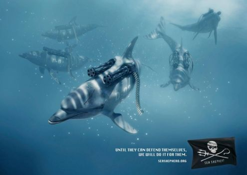 SeaShepherd dolphins